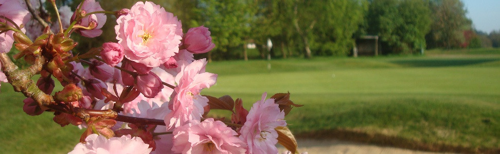 RCGC-7th-green-cherry-blossom-972×300