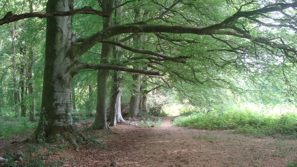Stansted-beeches-facing-East