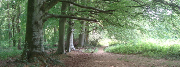 Stansted-beeches-facing-East-Pascal theme 630×235