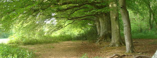 Stansted-beeches-facing-West-Pascal theme 630×235